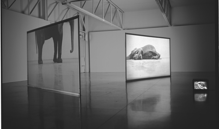 Douglas Gordon, <em>Play Dead; Real Time</em>, 2003. Video installation with two screens, monitor, and colour video, 21 min. loop and 11 min. loop, dimensions variable.